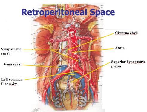 Retroperitoneal Space